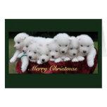 Samoyed Christmas Cards