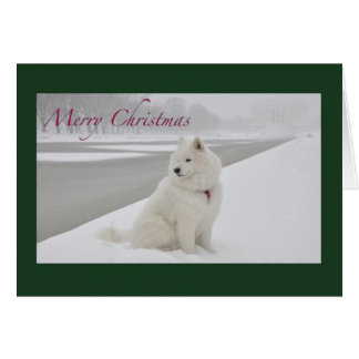 Samoyed Christmas (Lincoln Memorial) Card