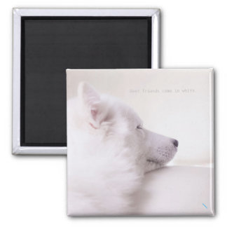 Samoyed dog, 2 inch square magnet