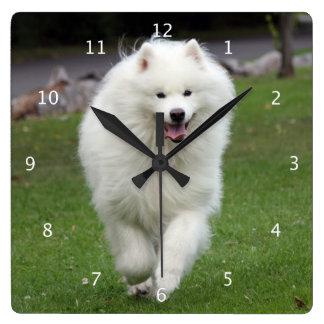 Samoyed dog beautiful photo portrait running square wall clock