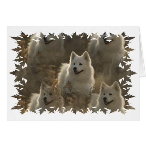 Samoyed Dog Breed Greeting Card