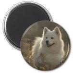 Samoyed Dog Breed Magnet Refrigerator Magnet