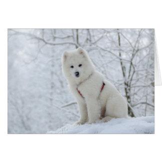 Samoyed dog card