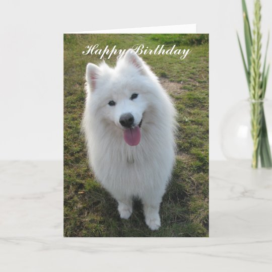 Samoyed Dog Happy Birthday Greeting Card