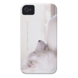 Samoyed dog,  iPhone 4 Case