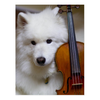 Samoyed Dog with Violin Postcard
