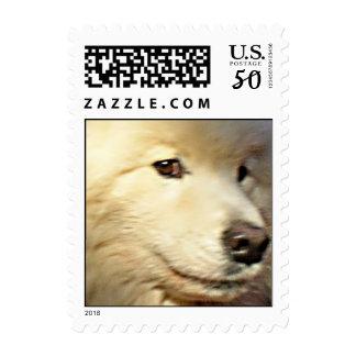 Samoyed face postage