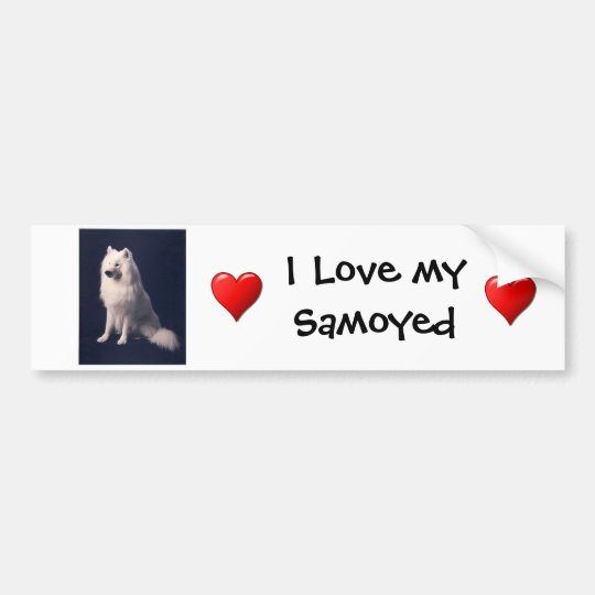 Samoyed Love Bumper Sticker