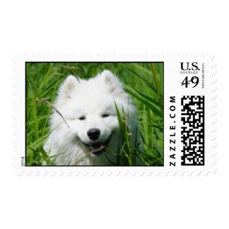 Samoyed Medium Size Postage Stamp