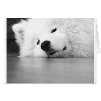 Samoyed Photo Dog White Card