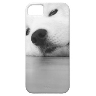 Samoyed Photo Dog White iPhone SE/5/5s Case