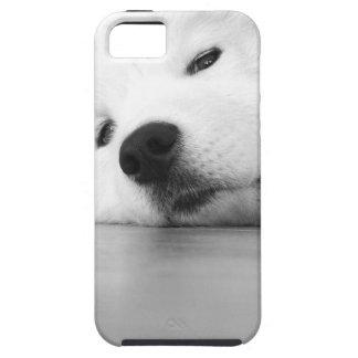 Samoyed Photo Dog White iPhone SE/5/5s Case
