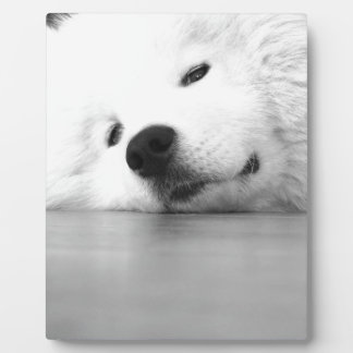 Samoyed Photo Dog White Plaque