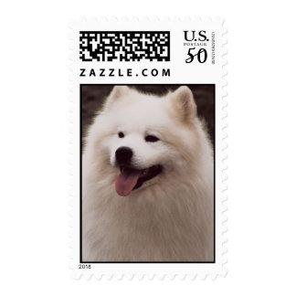 Samoyed Postage