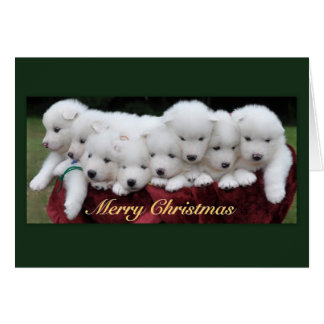 Samoyed Puppies (4 weeks old) Christmas Card