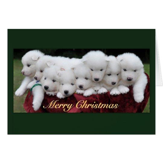 Samoyed Puppies 4 Weeks Old Christmas Card Zazzle Com