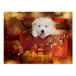 Samoyed Puppy In A Christmas Box Postcard