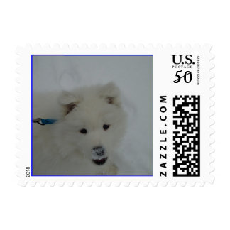 Samoyed puppy in snow postage stamp