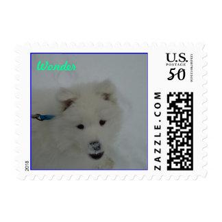"""Samoyed puppy in snow postage stamp """"Wonder"""""""