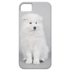 Samoyed puppy iPhone SE/5/5s case