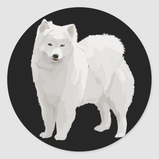 Samoyedo hermoso pegatina redonda