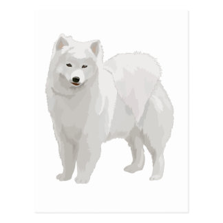 Samoyedo hermoso postales