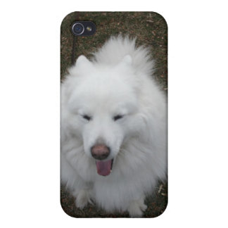 Samoyeds LOL Covers For iPhone 4