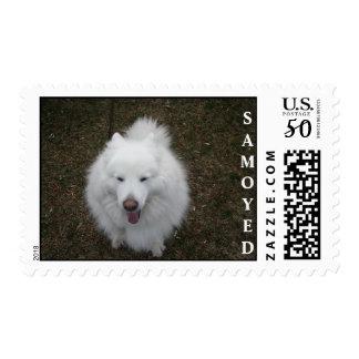 Samoyeds LOL Postage