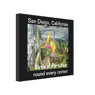 San Diego, California Birds of Paradise round evry Canvas Print
