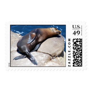 San Diego Harbor Seal At La Jolla Postage Stamp