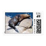 San Diego Harbor Seal At La Jolla Stamps