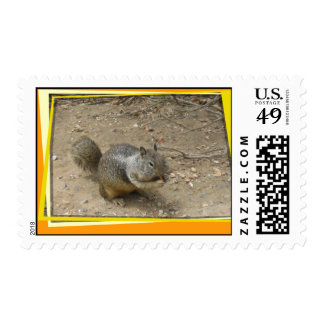 San Diego Nut Eater Postage Stamp