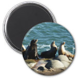 San Diego Sea Lions 2 Inch Round Magnet