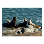 San Diego Sea Lions Poster