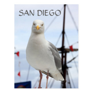 San Diego, Seagull and Boat Postcard
