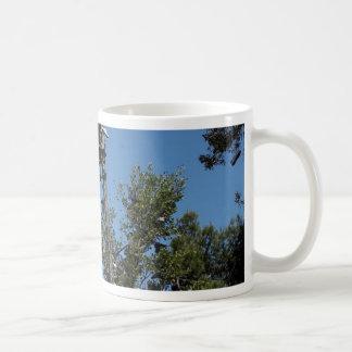 San Diego Shoe Tree In Morley Field Coffee Mug
