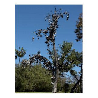 San Diego Shoe Tree In Morley Field Postcard