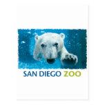San Diego Zoo Polar Bear Postcard