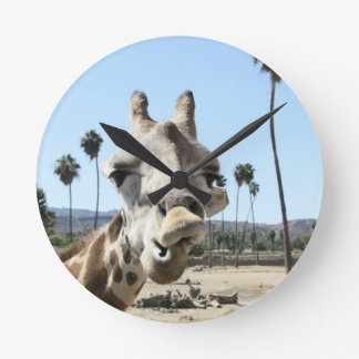 San Diego zoo Round Clock