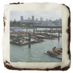 San Francisco and Pier 39 City Skyline Photography Square Brownie