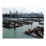 San Francisco and Pier 39 Postcard