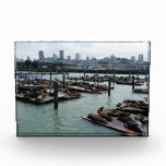 San Francisco and Pier 39 Sea Lions City Skyline Award