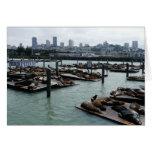 San Francisco and Pier 39 Sea Lions City Skyline Card