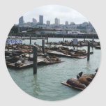 San Francisco and Pier 39 Sea Lions City Skyline Classic Round Sticker