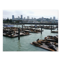 San Francisco and Pier 39 Sea Lions City Skyline Photo Print