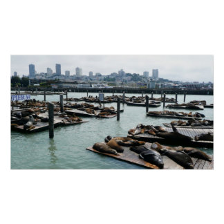 San Francisco and Pier 39 Sea Lions City Skyline Poster