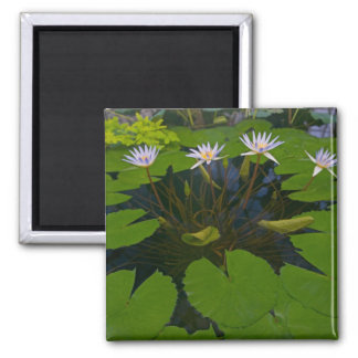 San Francisco Californias Golden Gate Park and 2 Inch Square Magnet
