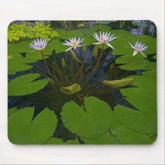 San Francisco Californias Golden Gate Park and Mouse Pad