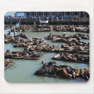 San Francisco Pier 39 Harbor Seals Mousepad