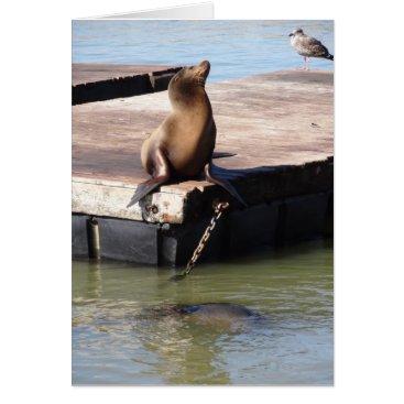 everydaylifesf San Francisco Pier 39 Sea Lion Greeting Card